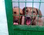 Campaña de SOS de la Asociación en Defensa de los Animales
