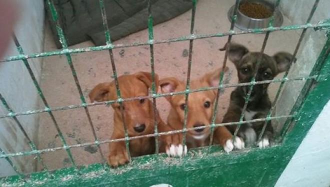 """Una campaña de sensibilización de la Asociación """"San Francisco de Asís"""" evitará que  20 perros sean sacrificados"""