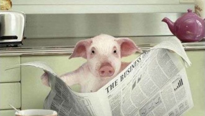 Los avatares del cerdo