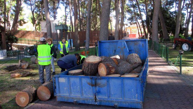 Tres pinos caídos en el Parque Municipal