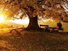 En el otoño de la vida