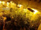 Cuatro detenidos por tráfico de drogas en Hellín