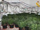 La Guardia Civil detiene a dos personas por cultivar marihuana en una vivienda deshabitada de Albatana