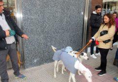 Merienda solidaria contra el maltrato animal