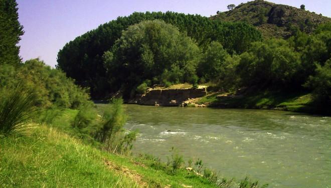 La CHS eliminará la vegetación exótica y creará un bosque de ribera en el río Mundo en Hellín