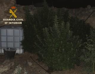 La Guardia Civil de Albacete interviene 13 kilos de marihuana en una pedanía de Ayna