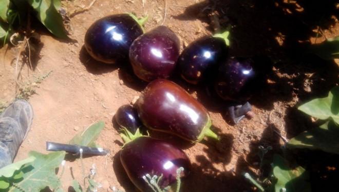 UPA CLM preocupada por las más de 3.000 toneladas de frutas y hortalizas en la comarca de Hellín sin salida por el veto ruso