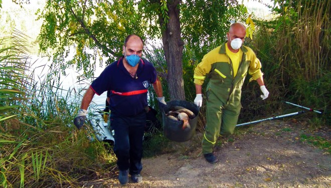 Grave episodio de mortandad de peces en la Laguna de los Patos
