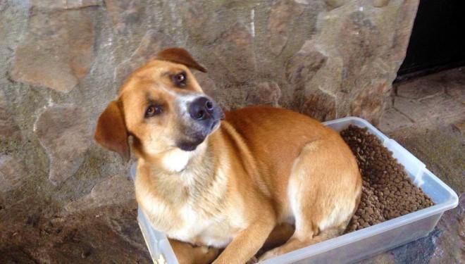 Un cazador mata de un disparo a un perro de una protectora que paseaba con su cuidadora en Méntrida (Toledo)