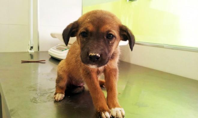 Uno de los perros en Asociación de Defensa de Animales San Francisco de Asís de Hellín