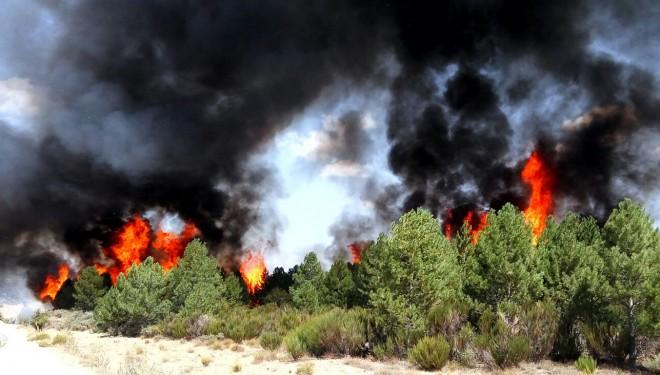 Controlado el incendio forestal de Nerpio