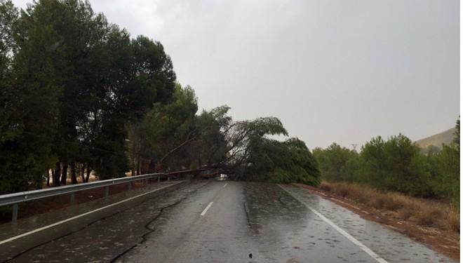A causa de la tormenta un pino cayó sobre la carretera N-301