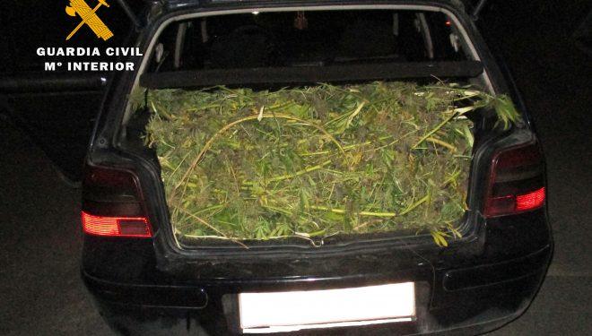 La Guardia Civil detiene a cinco personas e interviene 20 kilos de marihuana