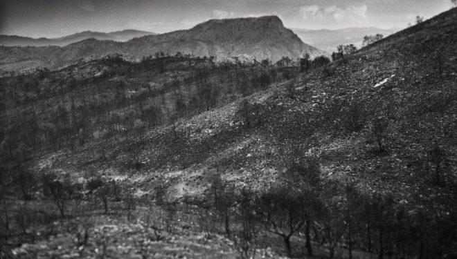 Un trabajo fotografico de David Flores, sobre el incendio de la Sierra de los Donceles, seleccionado en el Festival de Foto España