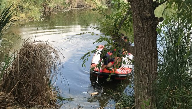 Miles de carpas muertas aparecen en la Laguna de los Patos