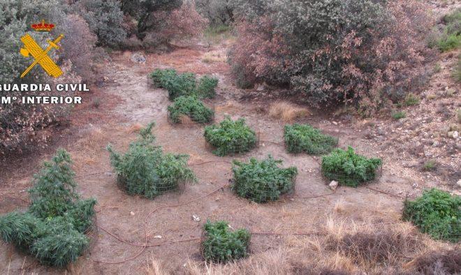 Localización de plantaciones de cannabis sativa.