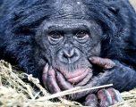 Hacia una sociedad bonobo