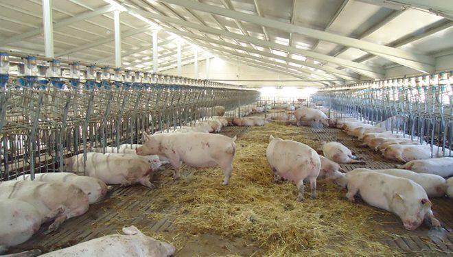 Julián Martínez y María Jesús López, abogan por una solución rápida al problema de la macrogranja de cerdos
