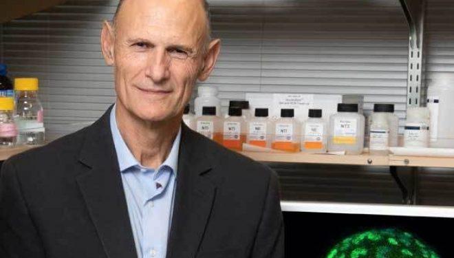 Izpisúa crea embriones artificiales a partir de una única célula de un ratón