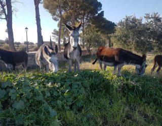 Cinco burros sueltos en las cercanías del Cementerio Municipal