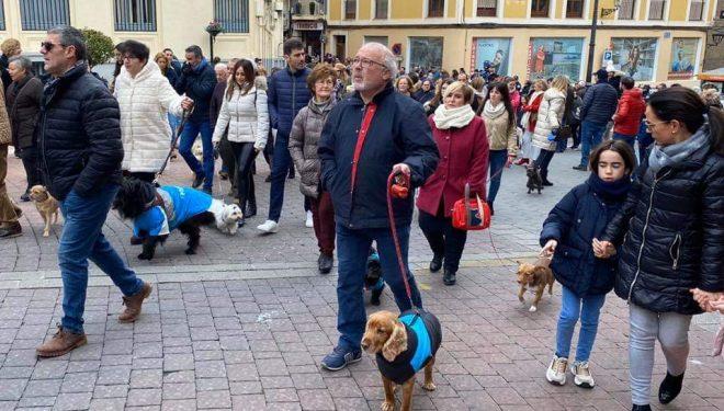 San Antón procesionó con mucho frío y con banda, pero sin nieve, ni cohetes