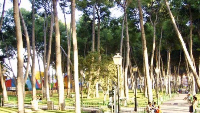 La remodelación del Parque municipal exige la tala del 47% de los pinos existentes