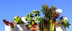 Primavera en cuarentena