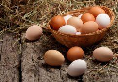 Encomiástica del huevo