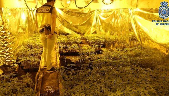 """Detenidos los siete integrantes de una organización criminal internacional dedicada al tráfico de """"Cannabis"""""""