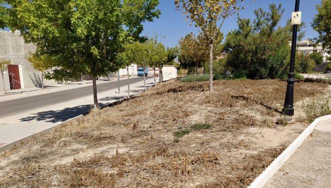 El PP reclama una mayor atención del Gobierno Municipal en el Barrio de El Palomar