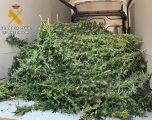 Detenidas tres personas en Minateda con casi 7 kilos de marihuana
