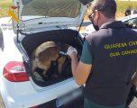 Dos detenidos y medio kilo de hachís intervenido en la última operación de la Guardía Civil en el término municipal de Hellín