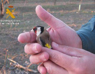 Dos personas investigadas por capturar pájaros silvestres con medios prohibidos