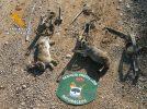 La Guardia Civil interviene tres cepos para la captura de pequeños mamíferos el término municipal de Hellín