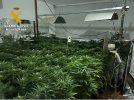 Detenida una persona y desmantelado un punto de cultivo indoor de cannabis sativa en Molinicos