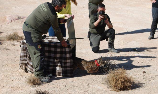 <b>El Gobierno regional activa un dispositivo de seguimiento y control sobre 'Quastellana</b>.