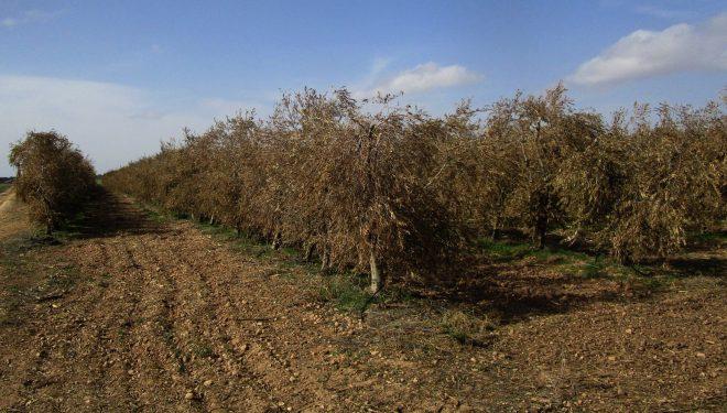Seis explotaciones agrícolas del municipio de Hellín beneficiadas por El MAPA