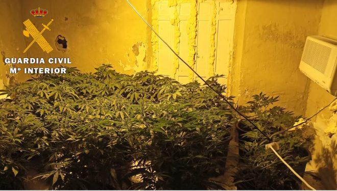 """Detenidas tres personas e investigadas otras tres por cultivo """"indoor"""" de marihuana en Tobarra"""